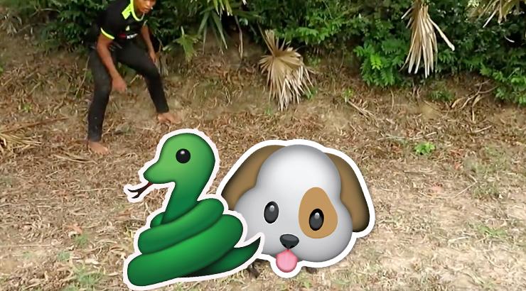 Cani mangiati dai serpenti? Non credo